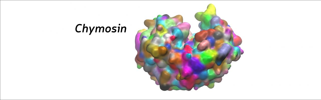 Enzym